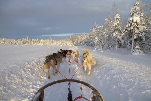Guida di una slitta trainata da cani & soggiorno 2 notti